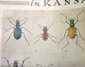 NEW SELLER SALE 10 RanDom pages -- from old book on Insects and Bugs In Kansas For your arTworK n CollAge