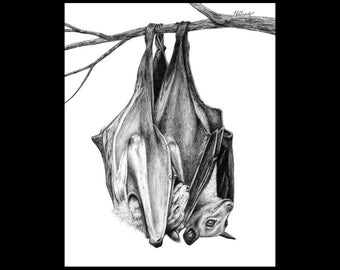 Bat Snuggles 8 x 10 Signed Giclee Fine Art Print