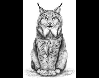 Canadian Lynx Cat 8 x 12 Signed Giclee Fine Art Print