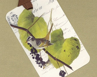 Six White Crested Sparrow Gift Tag Set, Hang Tags, Art Tag Set, Bookmarks PSS 0717