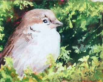 ACEO Original Painting in Opaque Watercolor - Sparrow