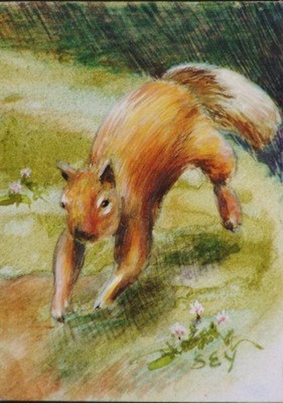 Original ACEO - Wildlife - Squirrel