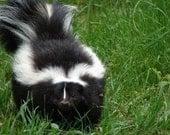 Skunk Fragrance Oil