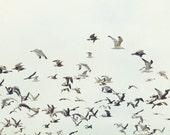 Birds - BOGO Sale- Fine Art Photography print - seagulls 8x10