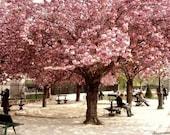 Paris print, pink cherry trees, Paris wall art, city park, Paris decor, 8x10 11x14 16x20 print 'Pink Paris'