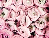 "Flower photography - pink floral wall art - pastel pink nursery decor - french flower market - ranunculus flowers - ""Flower Kisses"""