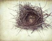 Birds Nest - Nature photography - fine art print - rustic wall art cream beige neutral decor