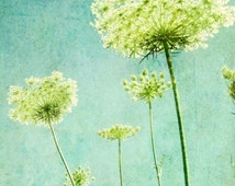"""Flower photography - aqua blue wall art - nature photography - queen Annes lace - lime green decor botanical art """"Looking Up"""""""