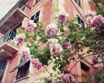 Italy travel photograph pastel coral pink roses peach wall art architecture print 'Little Italian Roses'