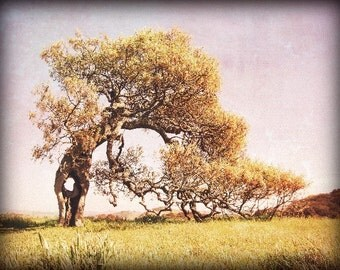 Oak tree photograph vintage style rustic gold mauve wall art California landscape 'Helens Tree'