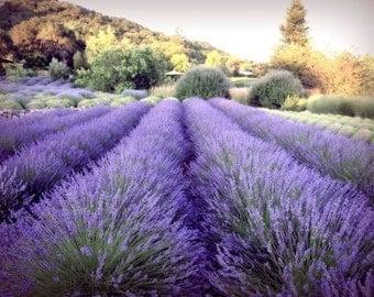 "Lavender field, fine art photograph - purple wall art decor - colorful landscape - photography print - 8x10 11x14 16x20 print ""Serenity"""