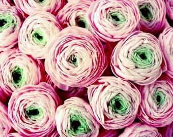 "Botanical photography print pink green wall art ranunculus flowers french flower market ""Bundle of Sweetness"""