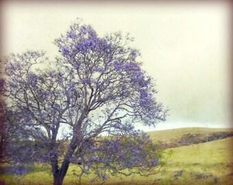 "Fine Art Print Landscape Photography Purple Green Wall Art ""Memories of Kula"""