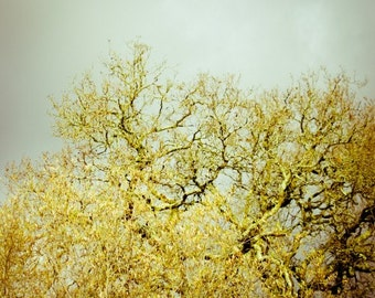 """Nature photography 