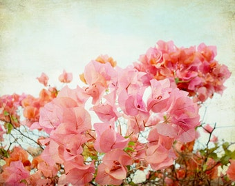 Botanical photography print tropical coral pink bougainvillea flower wall art - Pink Chiffon