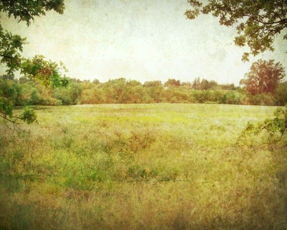 Landscape photography / olive green / amber gold trees / vintage antique style / nature woodland wall art / 'Summer Meadow'