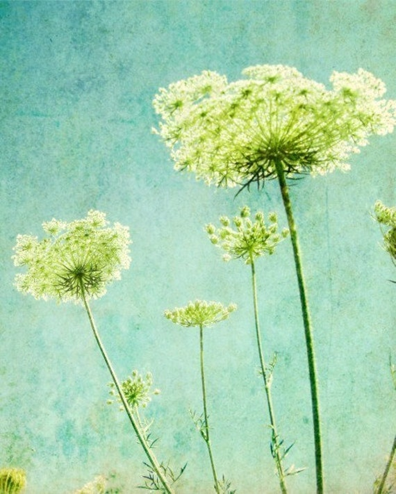 Looking Up - Nature photography Queen Anne's lace  flowers photograph Botanical Art Photography aqua blue lime green - 8x10