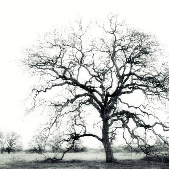 "Black and white tree wall art - minimal nature print - California landscape photograph  ""Oak Tree Silhouette"""