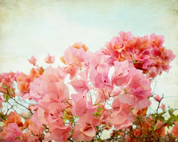 "Tropical floral wall art - bougainvillea flowers - coral pink orange photograph -  pale aqua - salmon pink home decor ""Pink Chiffon"""