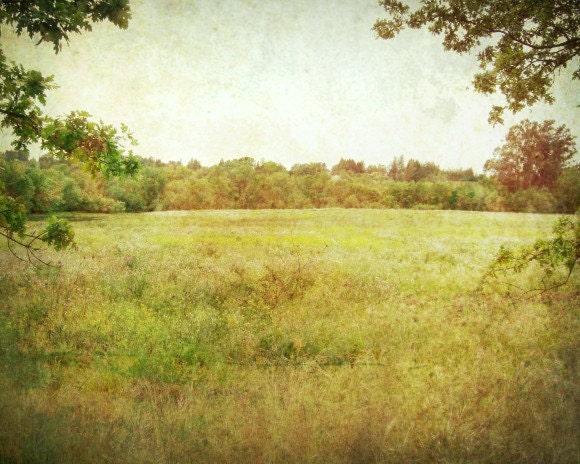 Landscape photography olive green amber gold trees vintage