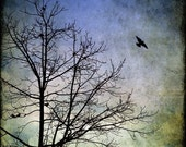 Nature Photography, Flying Bird, Black Crow, Winter Art Print, Tree, Bare Branches, Green, Blue, 8x8, 10x10, 12x12 - Awaken Your Dreams