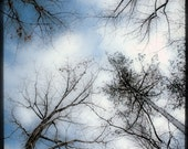 Tree Photograph, Winter Photography, Snow, Nature, Woodland Print, Forest, Sky, White, Blue, Heavenly - Up Above