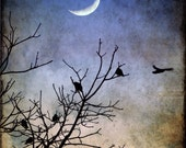 Crescent Moon Photography, Birds in Flight Print, Crows, Black Birds, Evening Sky Art, Winter, Trees, Dusk, Twilight - Flying into the Night