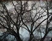 Nature Photography, Animal Print, Bird, Blackbird, Crow, Raven, Winter, Bare Tree Branches, Surreal, Black, Grey, Teal, Moody - Lone Crow