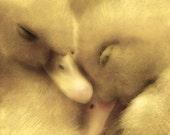 Animal Photography, Bird Photograph, Ducks, Ducklings, Baby Birds, Babies, Nursery Decor, Sleeping, Napping, Sweet - Sleepyheads