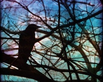 Bird Photograph, Crow, Raven, Tree Branches, Winter Evening, Night, Blue, Lavender, Teal, Green, Pink,  Yellow, 8x8, 12x12  -  The Batik Sky