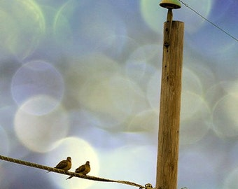 Bird Photography, Birds on a Wire, Telephone Line, Pair, Couple, Two Birds, Romance, Bokeh, Yellow, Pale Blue, Love, Lovers  - You and I