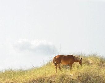 Wild Horse Photography, Nature Photography, Large Wall Art Print, Beach Cottage Decor, Coastal Art, Nautical Decor - Grazing on the Dunes