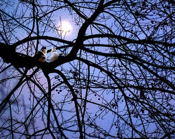 Cat Print, Animal Art, Cats in a Tree, Kitty, Full Moon, Calico, Persian, Tabby, Evening, Night, Black, Lavender, Blue -  Moon Dreaming