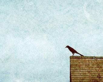 Bird Art, Black Crow Print, Animal Wall Art, Blackbird, Black Bird, Nature Decor, Roof, Rooftop, Perched Bird, Aqua, Teal Sky  - Sentry