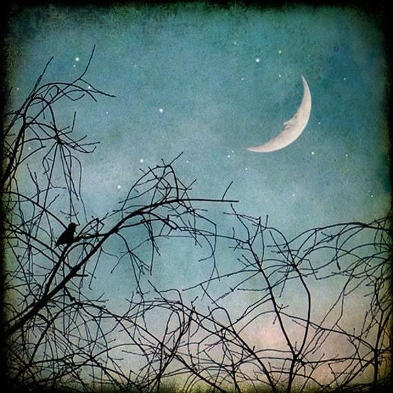 Nature Photograph, Man in the Moon, Crescent Moon, Moon Face, Stars, Nursery Decor, Bird in Tree, Winter Sky, Teal Blue Sky - Hello Moon