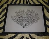 Framed Black Sea Fan Seafan Coral Reliquary