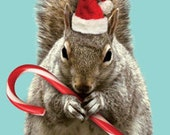 BOX OF TEN Holiday/Christmas Squirrel Cards