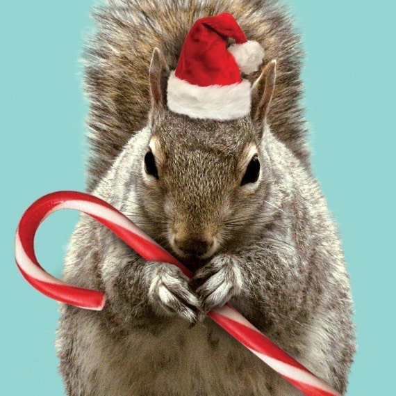 TWENTY Holiday\/Christmas Squirrel Cards