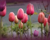 Handmade notecard Field of Tulips