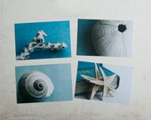 Sea Shells Postcard Set
