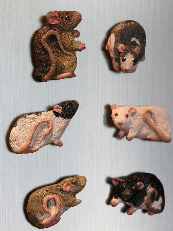 Custom Rat or Other Small Pet Magnets
