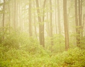 Spring .Dreamy green woodland tree photography . fog nature photograph . rustic wall art . cottage chic home . Serenity