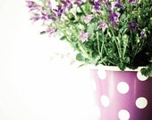 Spring .Happy Little Polka Dots. periwinkle flower photograph . purple wall art . whimsical home decor . shabby chic home . ready to frame