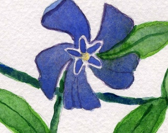 Vinca Vine an ACEO original watercolor floral painting.