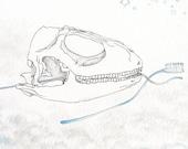 Toothbrush and Flossing Animal Skull, Original Sketch, Ink Drawing