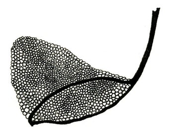 Butterfly Net, 5x7 Black and White Artist Print, Limited edition artwork