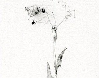 Drawing of a Flower, Black and White Artwork, Drawing Prints, Best Friends, Garden