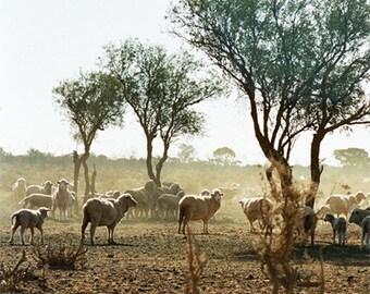 Australia, Desert Landscape Photography, Australian Outback, Grazing Sheep