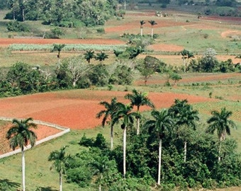 Cuba, Landscape Photograph, 8.5x11 Print, Travel Photography, Pinar del Rio Valley, Cuba
