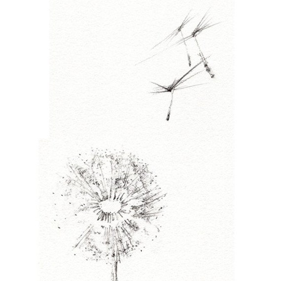 Dandelion seeds drawing for How to draw a dandelion step by step